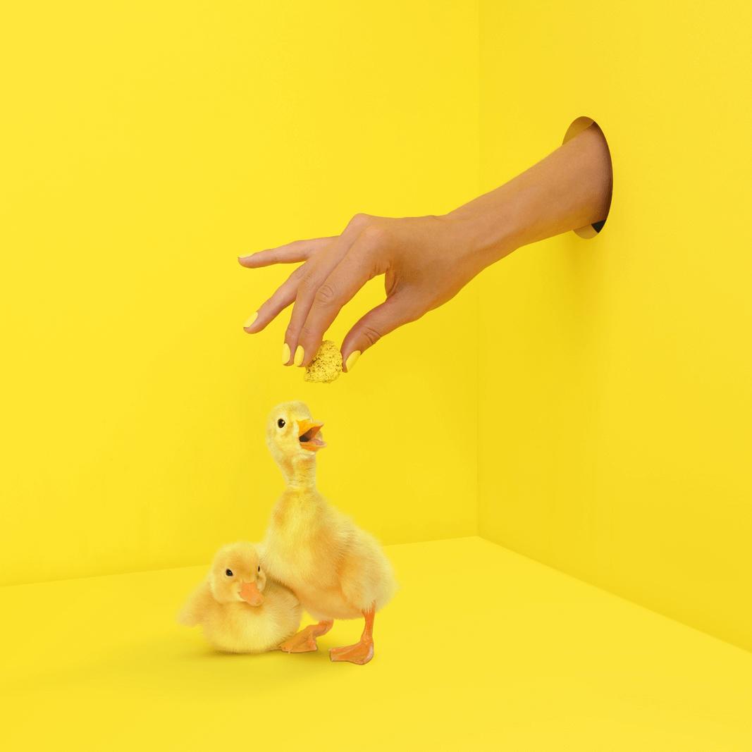 chick square